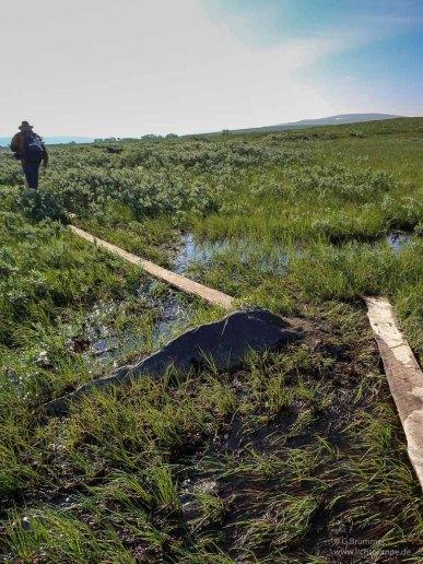 Pfad durch den Sumpf